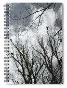 Crows In Cottonwoods Spiral Notebook