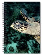 Cruising Hawksbill Spiral Notebook