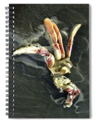 Crustacean On The Shore Spiral Notebook