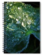 Crystal Lady's Mantle Spiral Notebook