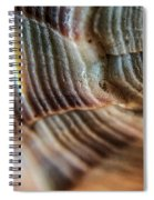 Crystals And Stones Shell 4721 Spiral Notebook