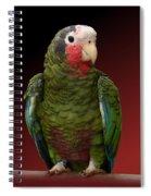 Cuban Amazon Parrot Spiral Notebook