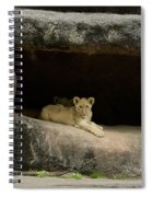 Cubs In Cave Spiral Notebook