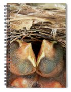 Cuddling Cardinals Spiral Notebook