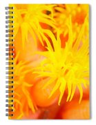 Cup Coral Spiral Notebook