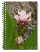 Curcuma Light Pink Spiral Notebook
