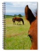 Curious Colt Spiral Notebook