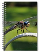 Curious Dragonfly Spiral Notebook