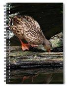 Curious Duck Spiral Notebook