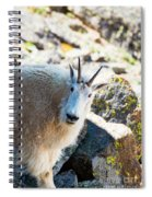 Curious Goat On The Mount Massive Summit Spiral Notebook