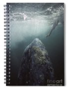 Curious Gray Whale And Tourist Spiral Notebook