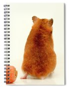 Curious Hamster 1 Spiral Notebook