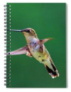 Curious Hummer Spiral Notebook