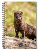 Curious Mink Spiral Notebook