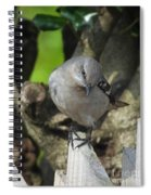 Curious Mockingbird Spiral Notebook