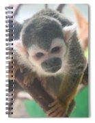 Curious Monkey Spiral Notebook