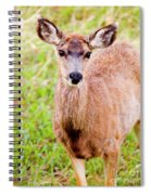 Curious Mule Deer Frolicking On A Colorado Spring Afternoon Spiral Notebook