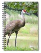 Curious Sandhill Crane Spiral Notebook