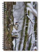 Curious White-backed Woodpecker Spiral Notebook