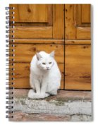 Curious White Cat  Spiral Notebook