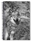 Curious Wolf Pup Spiral Notebook