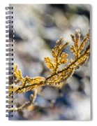 Curled Fern Frond Tip Spiral Notebook