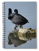 Curly, Moe, And Larry Spiral Notebook
