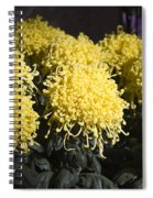 Curly Mums Spiral Notebook