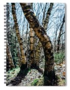 Curved Birch Tree Spiral Notebook