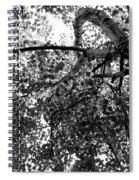 Curving Birch Bw Spiral Notebook