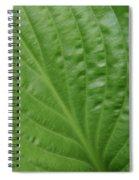Curvy Leaf Lines Spiral Notebook