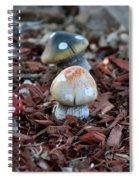 Cluster Of Toadstools  In Fairy Garden Spiral Notebook