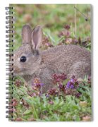 Cute Baby Bunny Spiral Notebook
