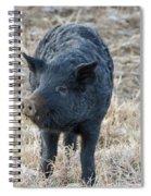 Cute Black Pig Spiral Notebook