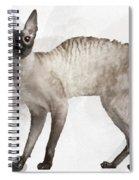 Cute Cornish Rex Youngster Spiral Notebook