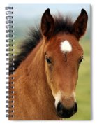 Cute Foal Spiral Notebook
