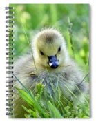 Cute Goose Chick Spiral Notebook