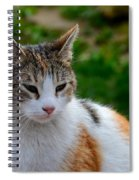 Cute Grey White And Orange Cat Poses And Gazes Spiral Notebook