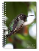 Cute Hummingbird Ready For Action Spiral Notebook