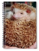 Cute Little Hedge Ball Spiral Notebook