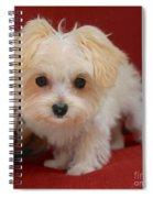Cute Maltipoo Spiral Notebook