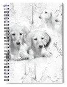 Cute White Salukis With Puppies Spiral Notebook