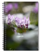 Cyclamen At Lachish 1 Spiral Notebook
