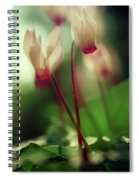 Cyclamens Spiral Notebook