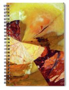 Cycle Of Life Squared  Spiral Notebook