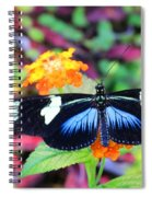 Cydno Longwing Butterfly Spiral Notebook