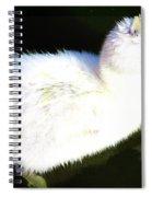 Cygnet  Spiral Notebook