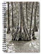 Cypress Evening Spiral Notebook