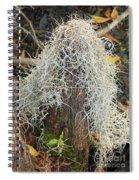 Cypress Knee Draped With Moss Spiral Notebook