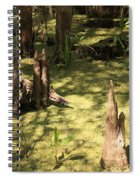 Cypress Knees In Green Swamp Spiral Notebook